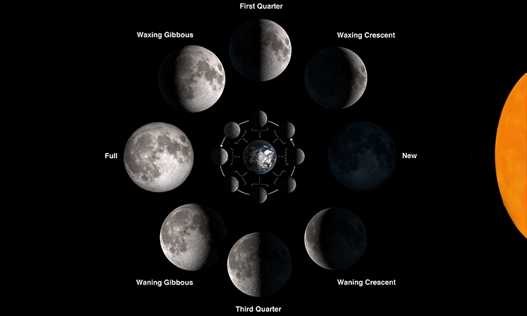 Moon Cycle Phases